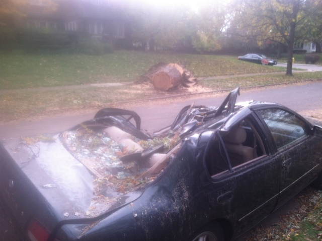 Nature's Fury: Strong winds uproot a tree and its limb smashes a nearby car.